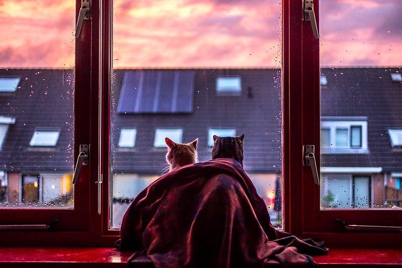 雨をぼんやり眺める猫の写真。