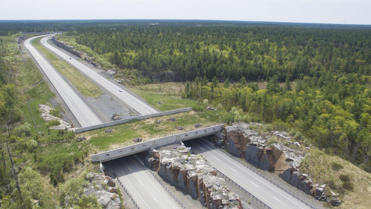 生態系を守る橋。生き物に優しい「アニマルブリッジ」