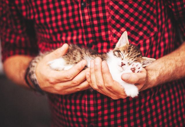 【科学的に証明】一緒にいるだけで、健康で幸せになれる!あなたがネコと暮らすべき「13のワケ」