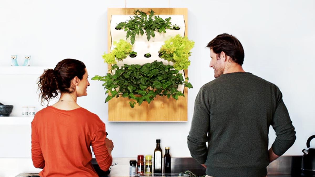 まるで絵画を鑑賞するかのごとく、「家庭菜園」を営む。