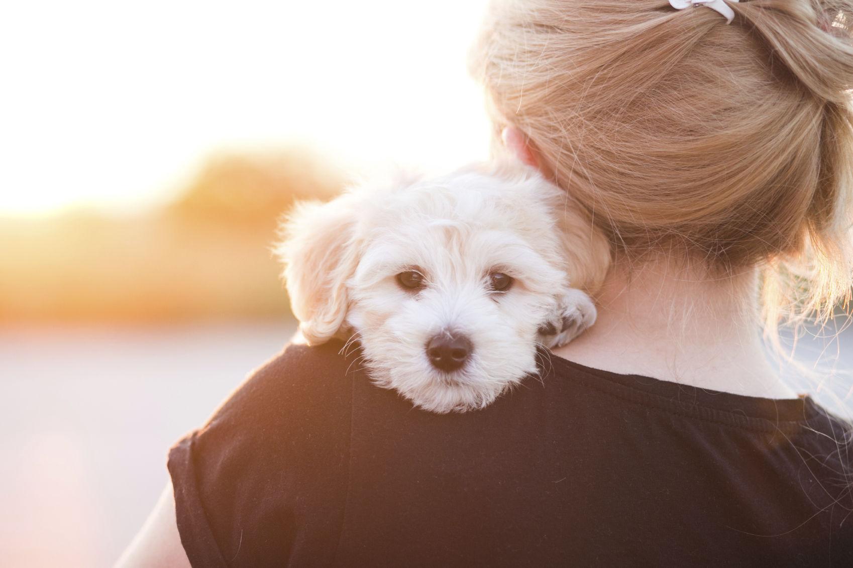 Resultado de imagen para maltese 犬 抱き締める