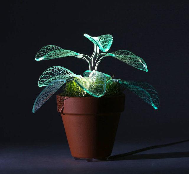 暗闇にともる、「Lamp Plant」のやさしい葉明かり
