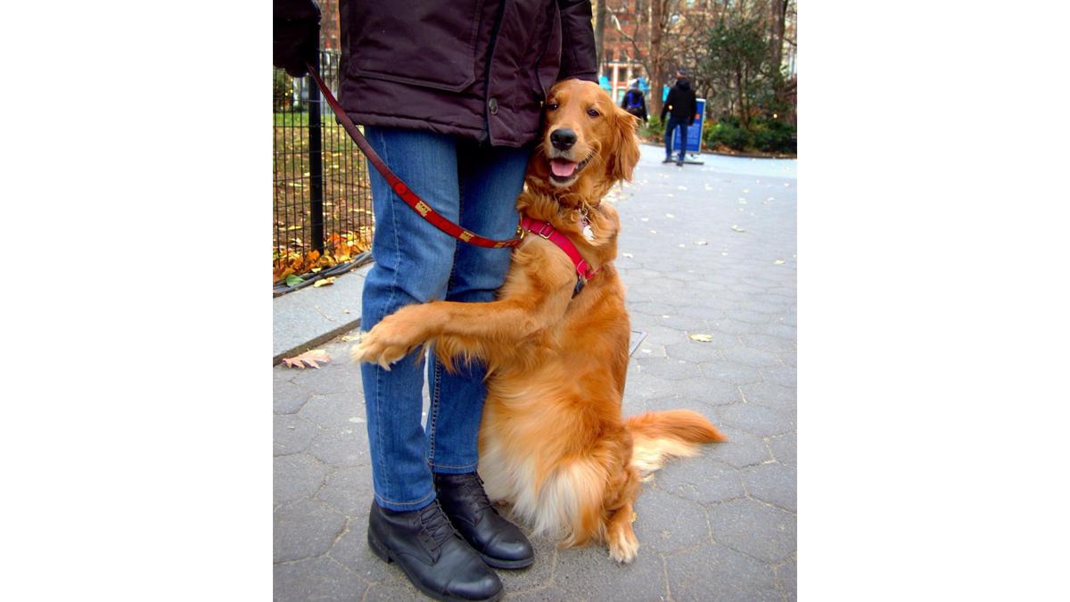 可愛い!道行く人々を「ハグ」で癒やす、NYの名物犬