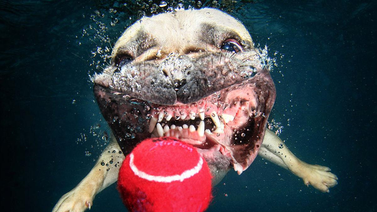 バシャーン!と「水に飛び込んだ犬」は、完全に野生に戻っていた。
