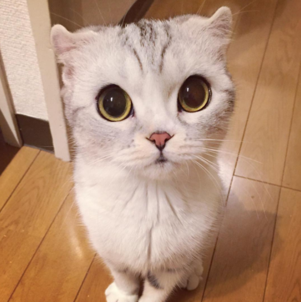 その目は反則でしょ!多くの人の心を奪った「魅惑のネコ」にご用心。