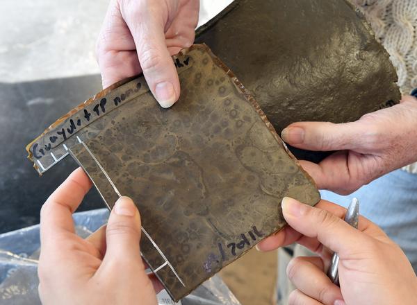 車のタイヤは、「卵の殻」と「トマトの皮」で代用可能(オハイオ州立大学)