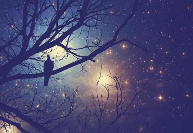 鳥の状態を示す夢